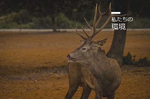 bnn_entorno_jp